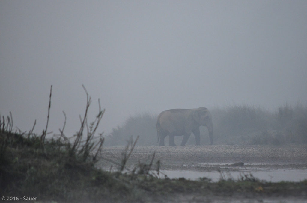 Elefant im Morgennebel