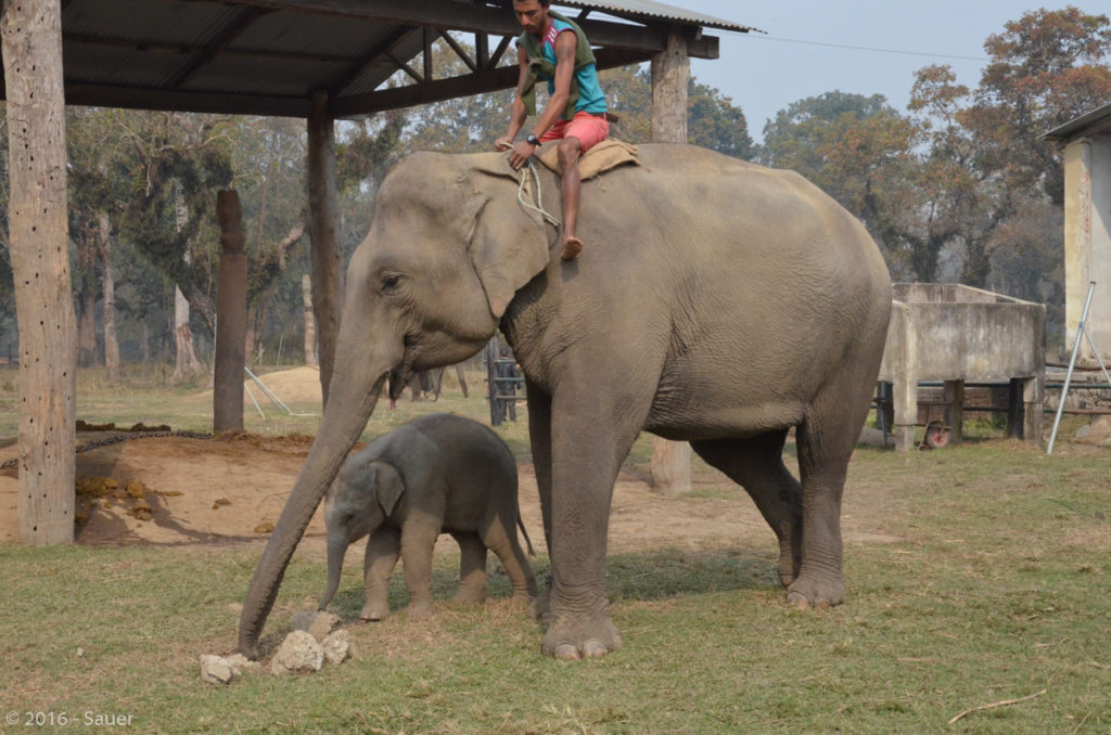 Elephant Breeding Center