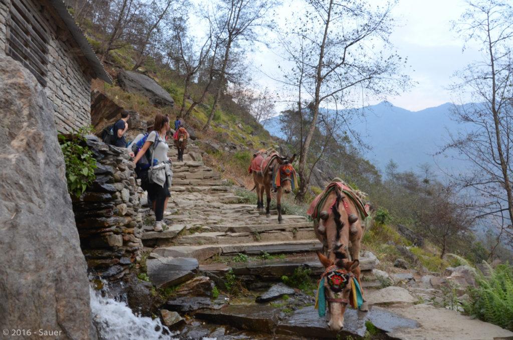 Die Dörfer sind nur noch über die Steintreppen zu erreichen, es gibt keine Straßen mehr. Alles muss zu Fuß oder mit Mulis den Berg hinauf transportiert werden.