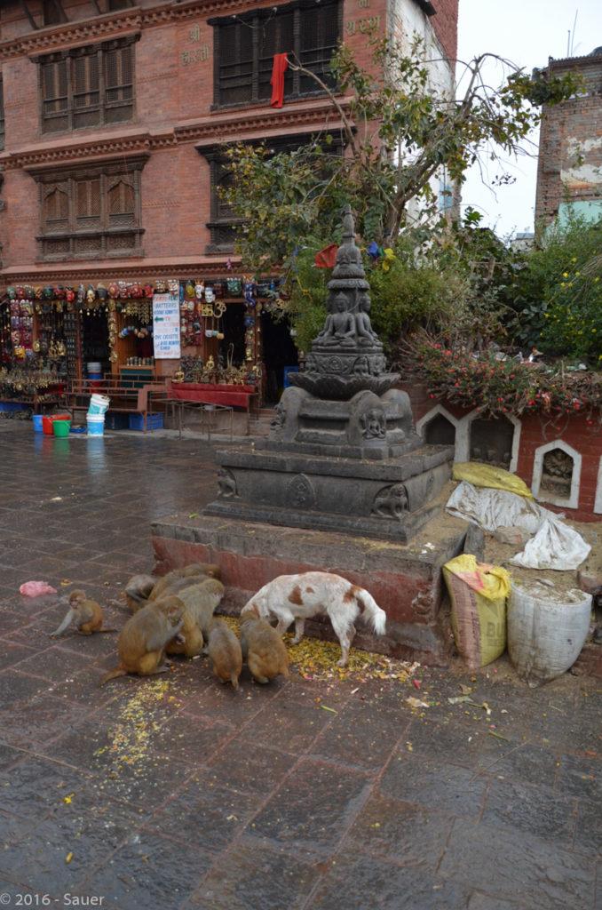 Affen an der Swayambunath Stupa