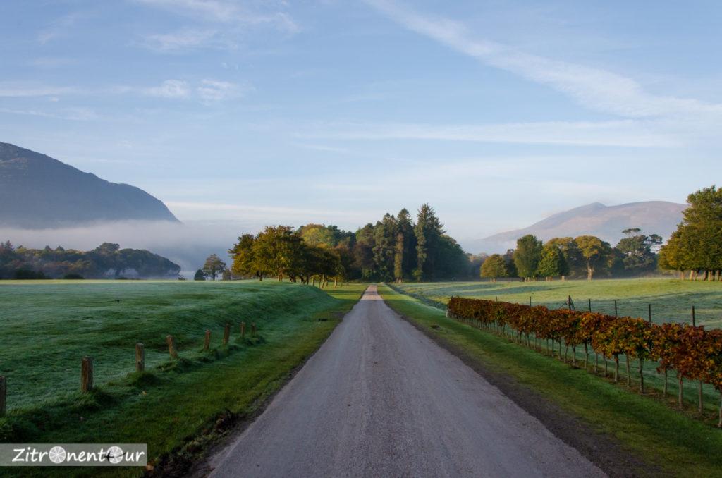 Früher Morgen im Killarney National Park