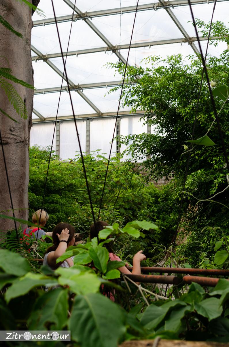 Zoo Leipzig Baumwipfelpfad Gondwanaland