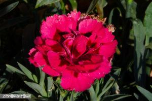 Blumen aufgenommen mit f/36 - Tiefenschärfe ist hoch, aber gesamtes Bild verwaschen