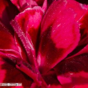 Detailansicht: Blumen aufgenommen mit f/36 - Tiefenschärfe ist hoch, aber gesamtes Bild verwaschen