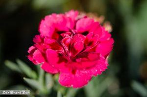 Blumen aufgenommen mit f/3,2 - Tiefenschärfe ist zwar gering, aber sehr scharf