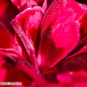 Detailansicht: Blumen aufgenommen mit f/3,2 - Tiefenschärfe ist gering, aber sehr scharf